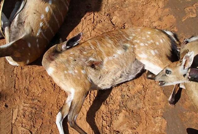 Cunene: IDF regista diminuição de actividade de caça furtiva