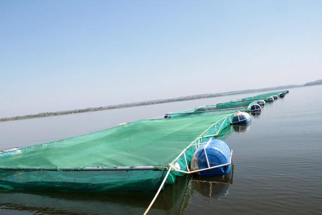 Moxico: Sacassange vai contar com centro de apoio a larvicultura de peixes